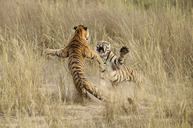 National Geographic 2014 Photo Contest
