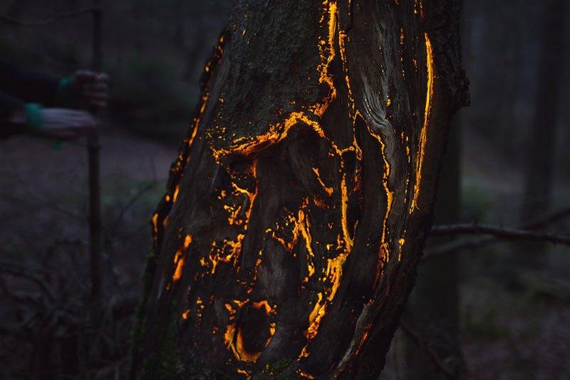 静寂が広がる夜の森を幻想的な世界に。 - プロジェクションマッピング