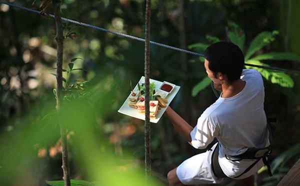 木の上にあるレストラン「ツリーポッドダイニング」-07