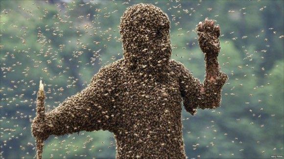 蜂くっつき大会