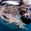 ジンベエザメが集まる海!メキシコ・ムヘーレス島でジンベイザメやマンタと泳ぐダイバーたちの大迫力画像